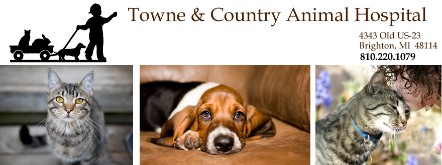 Welcome to Towne & Country Animal Hospital, located in 